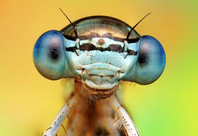 Уникално красиви макро фотоси на насекоми