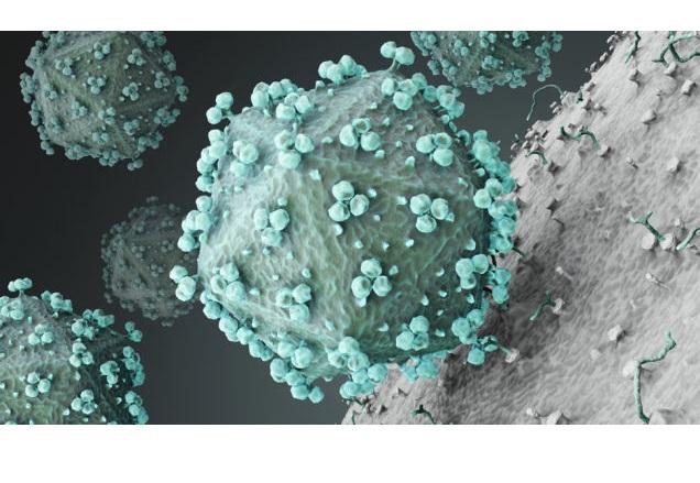 Еволюцията на ХИВ може би го прави по-безвреден за хората