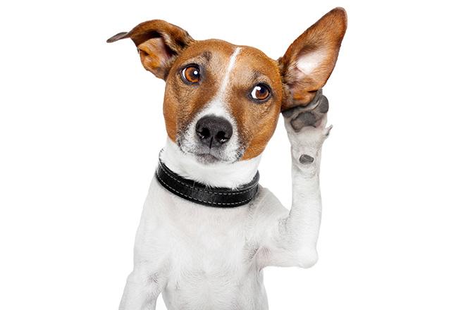Кучетата разбират повече, отколкото предполагаме