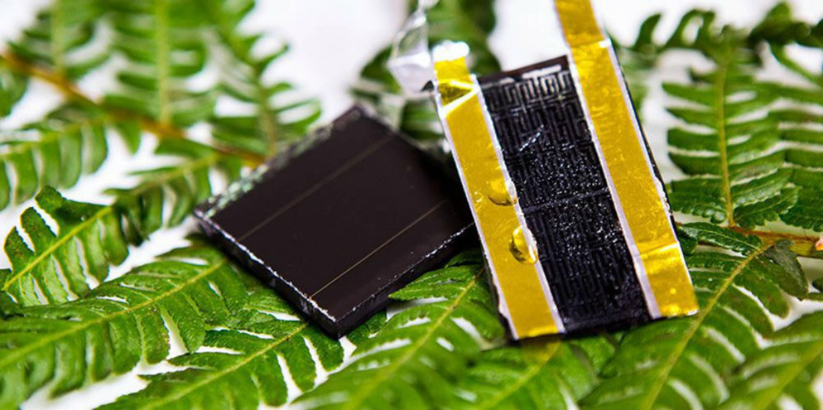 Папратовите листа помагат за създаването на нов свръхпроводник
