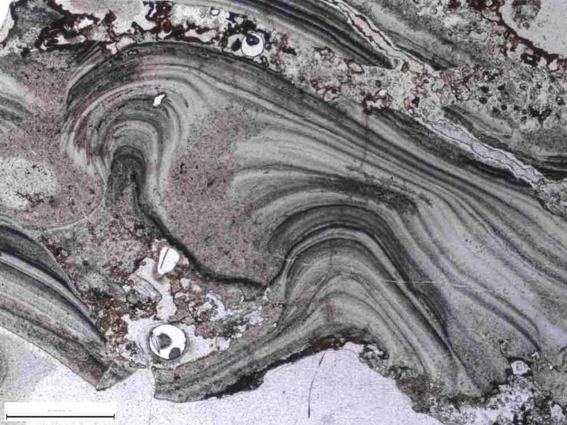 Скали в Австралия могат да крият най-старото доказателство за живота на Земята