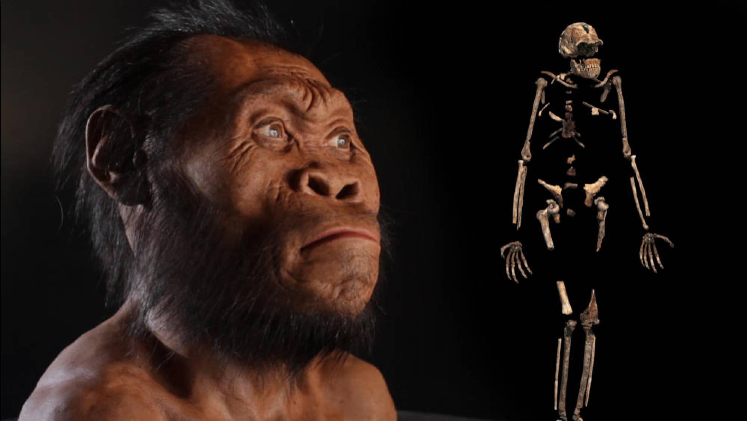 Древните човекоподобни Homo naledi са живели рамо до рамо с хората