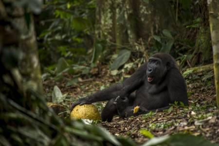 Природата в кадър: годишните награди за Wild Life фотография