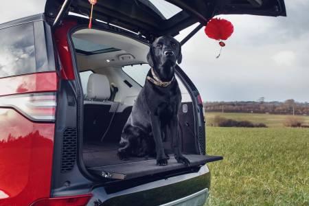 Land Rover: Най-добрият приятел на кучето, но не и на джоба ви