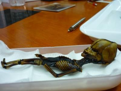Разкриха мистерията на миниатюрния скелет Ata