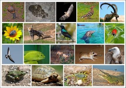 7 животни, чиито умения с лекота превъзхождат човешките