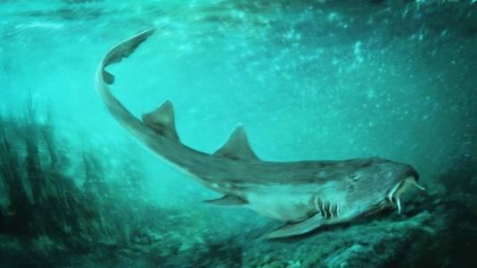Ето какво е общото между изчезнал вид акула и една класическа аркадна игра
