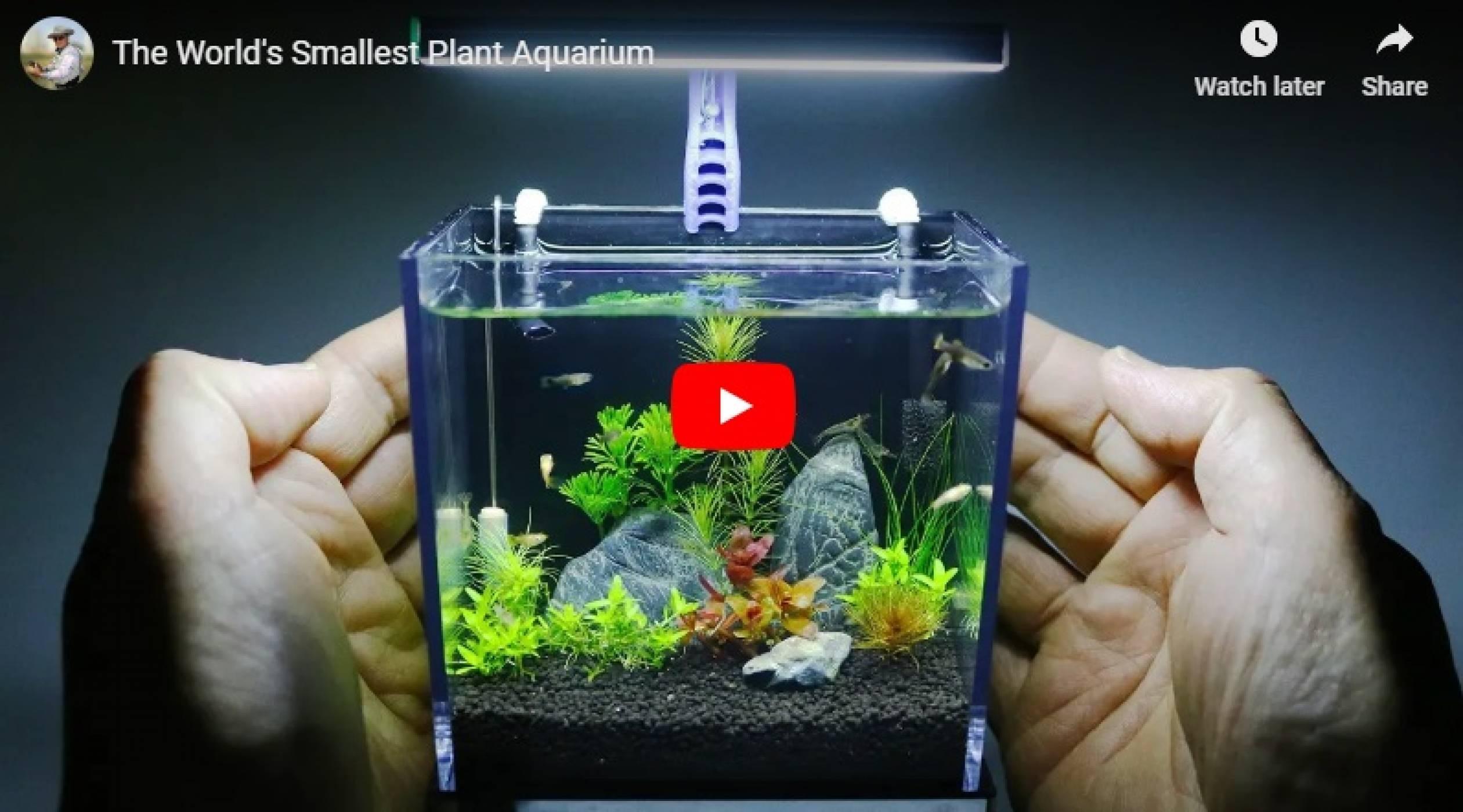 Кутия на GoPro оживява като най-симпатичния аквариум (ВИДЕО)