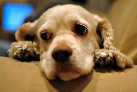 Изкуствен интелект ще превежда лая на кучето ви по време на изолация
