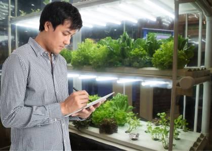 Нов вид сензори ще засичат кога растенията са стресирани