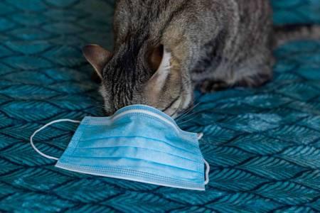 Появиха се първите случаи на домашни животни с Covid-19