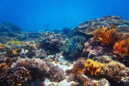 Познаваме по-малко от 1/5 от Световния океан (ВИДЕО)
