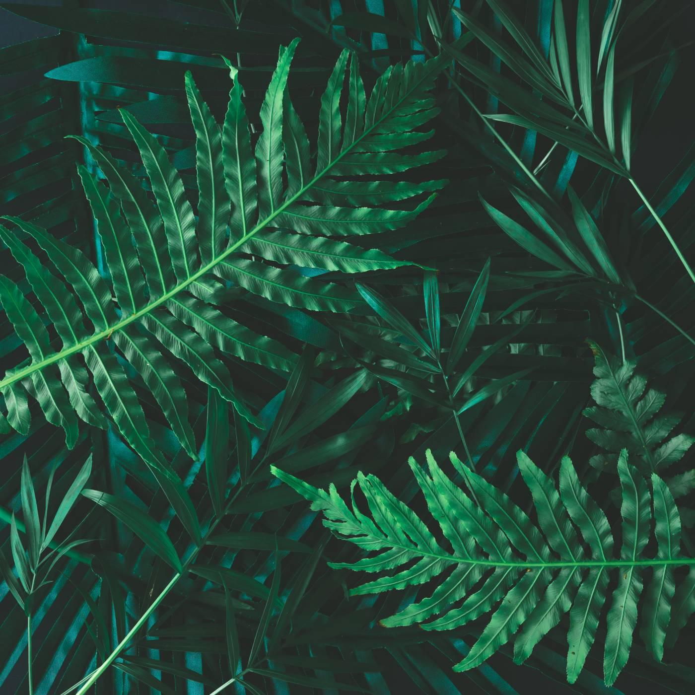 Защо растенията са зелени?