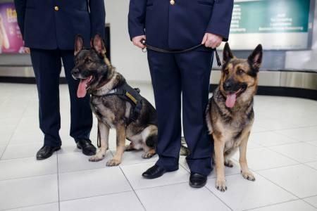 Специално обучени кучета надушват преносителите на COVID-19
