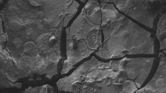 Откриха запазена мозъчна клетка в трупа на загинал под Везувий
