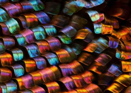 Красотата под микроскоп: най-впечатляващите снимки за 2020
