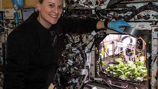 Космонавти за пръв път ядоха отгледани на МКС зеленчуци