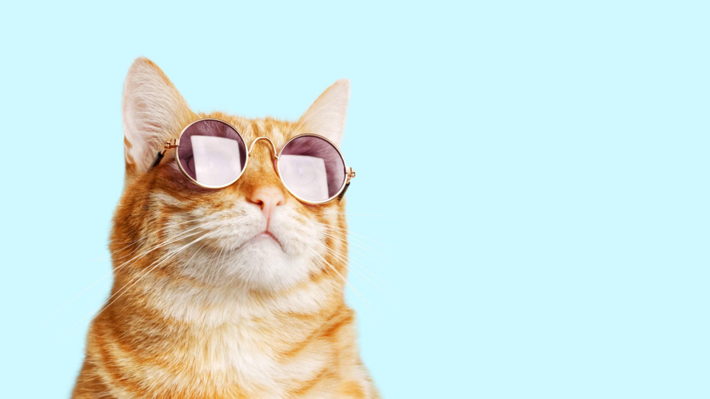 Как да се превърнете в котка (вZoom)