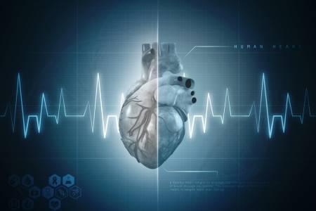 Учени създадоха най-точния 3D модел на сърцето в света