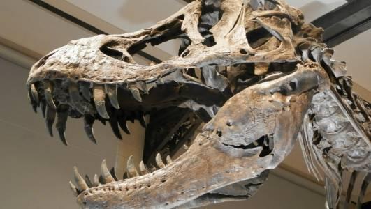 Милиарди тиранозаври са били пълни господари на Земята някога