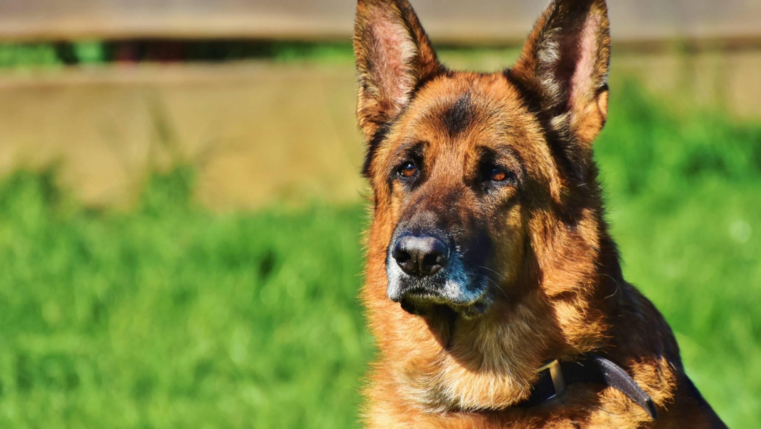 Dog Fest 2021: по-различната кучешка радост