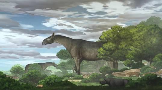 Новооткрит фосил на гигантски носорог завихря въображението и загатва за колосални размери