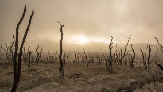 Сушата на Земята може да стане следващата пандемия за човечеството
