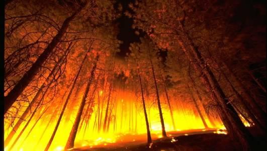 Апокалиптично: горските пожари в Сибир са по-големи от всички останали, бушуващи по света, заедно