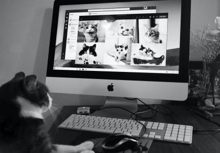 Имате две котки у дома? Учените се нуждаят от вашата помощ!